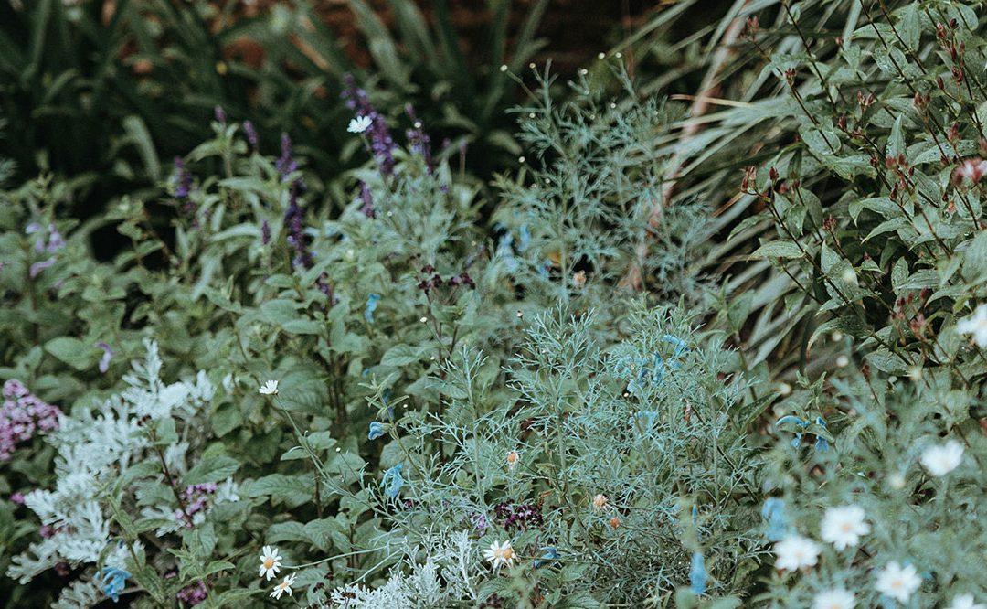 Dlaczego właśnie rośliny na lekooporne infekcje?